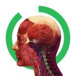 Arloon Anatomy Icon